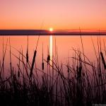 johngessner_cattails-at-sunrise